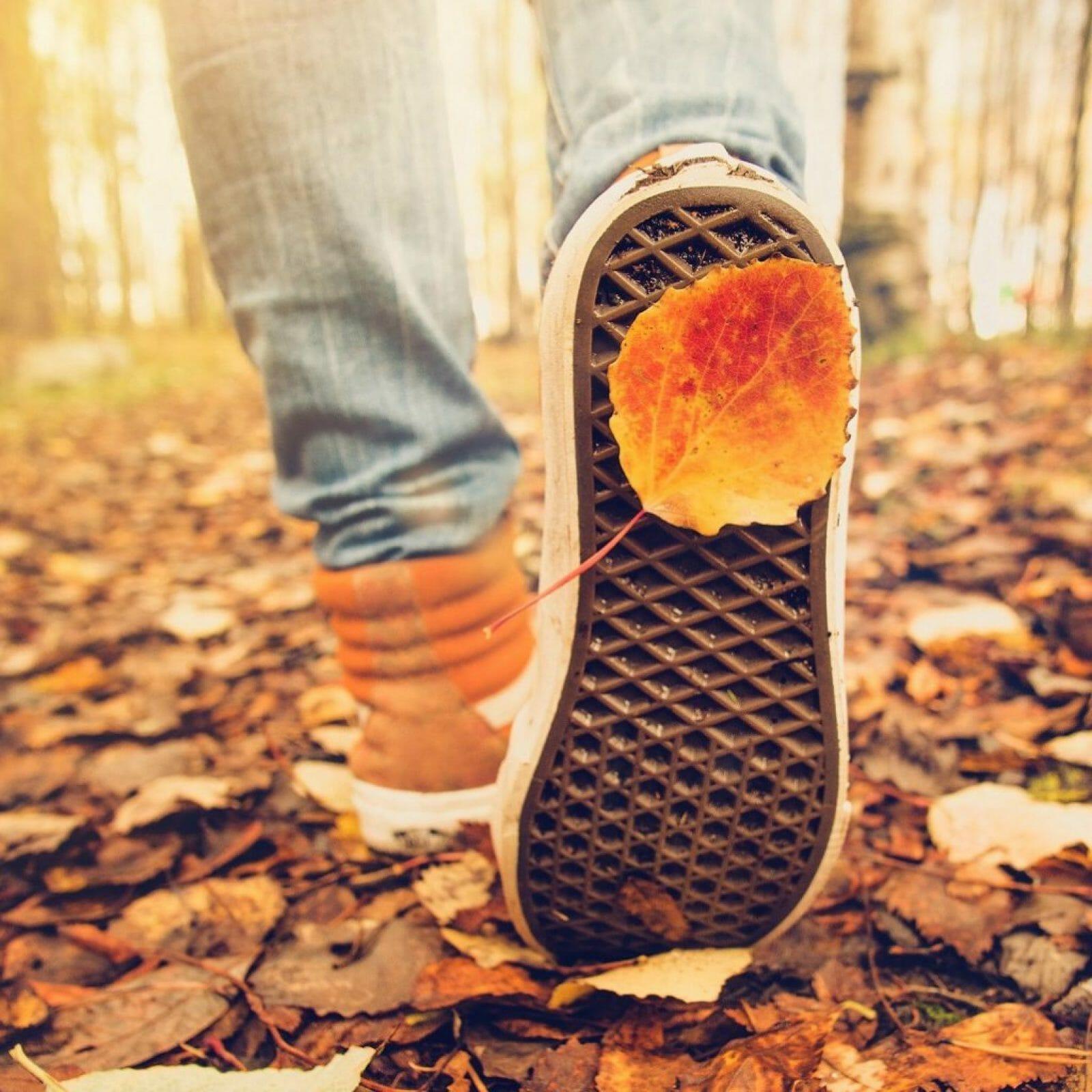 nature-walk-wandelmeditatie-gratis